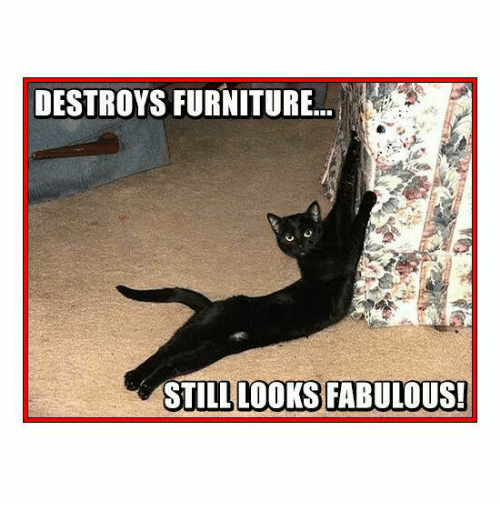 fabulousness: DESTROYS FURNITURE  STILL LOOKS FABULOUS!