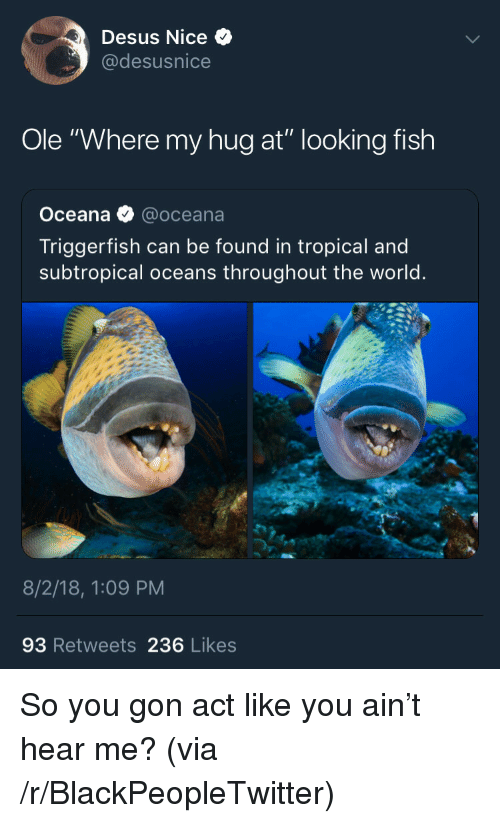 """Blackpeopletwitter, Fish, and World: Desus Nice  @desusnice  Ole """"Where my hug at"""" looking fish  Oceana @oceana  Triggerfish can be found in tropical and  subtropical oceans throughout the world  8/2/18, 1:09 PM  93 Retweets 236 Likes So you gon act like you ain't hear me? (via /r/BlackPeopleTwitter)"""