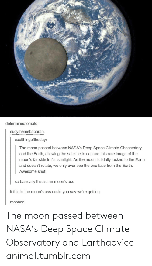 Advice, Ass, and Nasa: determinedtomato:  sucymemebabaran:  coolthingoftheday:  The moon passed between NASA's Deep Space Climate Observatory  and the Earth, allowing the satellite to capture this rare image of the  moon's far side in full sunlight. As the moon is tidally locked to the Earth  and doesn't rotate, we only ever see the one face from the Earth.  Awesome shot!  so basically this is the moon's ass  if this is the moon's ass could you say we're getting  mooned The moon passed between NASA's Deep Space Climate Observatory and Earthadvice-animal.tumblr.com