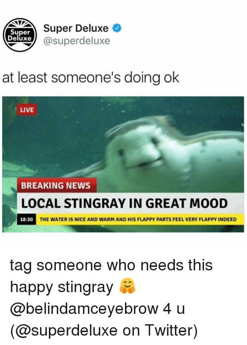 Memes, Mood, and News: DETSuper Deluxe  Super  Deluxe) @superdeluxe  at least someone's doing ok  LIVE  BREAKING NEWS  LOCAL STINGRAY IN GREAT MOOD  18:30  THE WATER IS NICE AND WARM AND HIS FLAPPY PARTS FEEL VERY FLAPPY INDEED tag someone who needs this happy stingray 🤗 @belindamceyebrow 4 u (@superdeluxe on Twitter)