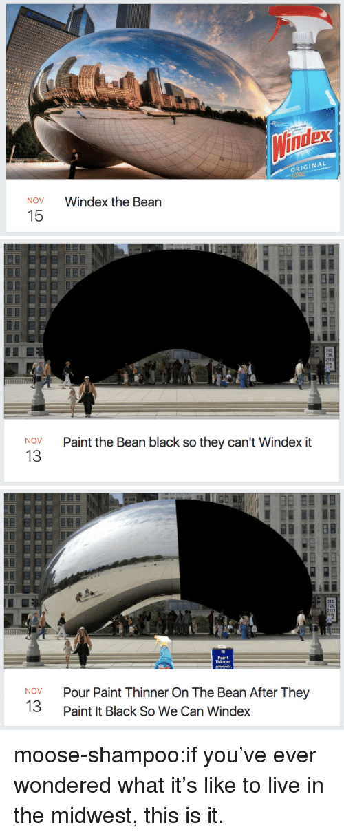 Target, Tumblr, and Black: dex  ORIGINAL  NOV  Windex the Bean  15   726.  2113  Paint the Bean black so they can't Windex it  NOV  13   726.  2113  Paint  Thinner  Pour Paint Thinner On The Bean After They  Paint It Black So We Can Windex  NOV  13 moose-shampoo:if you've ever wondered what it's like to live in the midwest, this is it.