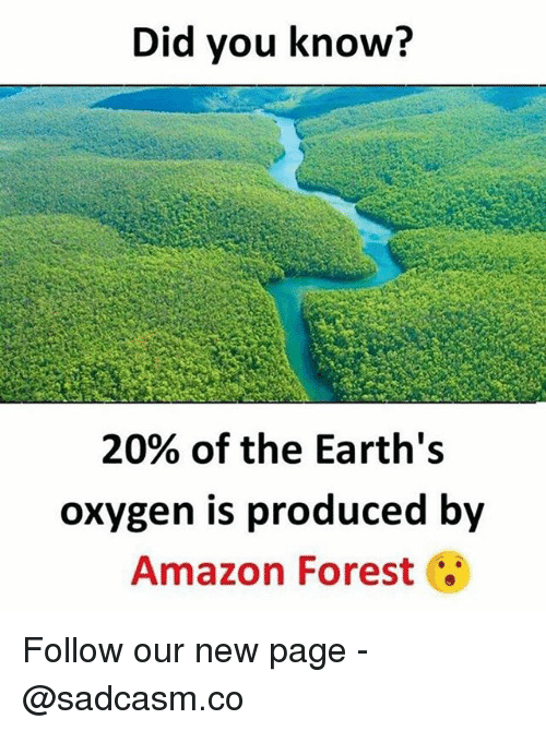 amazon forest: Did you know?  20% of the Earth's  oxygen is produced by  Amazon Forest Follow our new page - @sadcasm.co