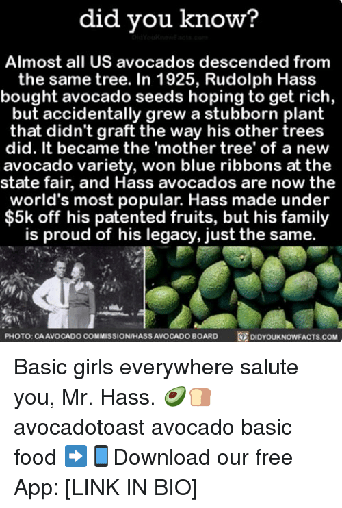 state fair: did you know?  Almost all US avocados descended from  the same tree. In 1925, Rudolph Hass  bought avocado seeds hoping to get rich  but accidentally grew a stubborn plant  that didn't graft the way his other trees  did. It became the 'mother tree' of a new  avocado variety, won blue ribbons at the  state fair, and Hass avocados are now the  world's most popular. Hass made under  5k off his patented fruits, but his family  is proud of his legacy, just the same.  PHOTO: CAAVOCADO COMMISSIONHASSAVOCADOBOARD  DIDYOUKNOWFACTS.COM Basic girls everywhere salute you, Mr. Hass. 🥑🍞 avocadotoast avocado basic food ➡📱Download our free App: [LINK IN BIO]