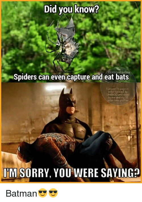 atma: Did you know?  Confused atma  Spiders can even capture and eat bats  UNESCO and voted  me and my 10  ITM SORRY, YOU WERE SAYINGO Batman😎😎