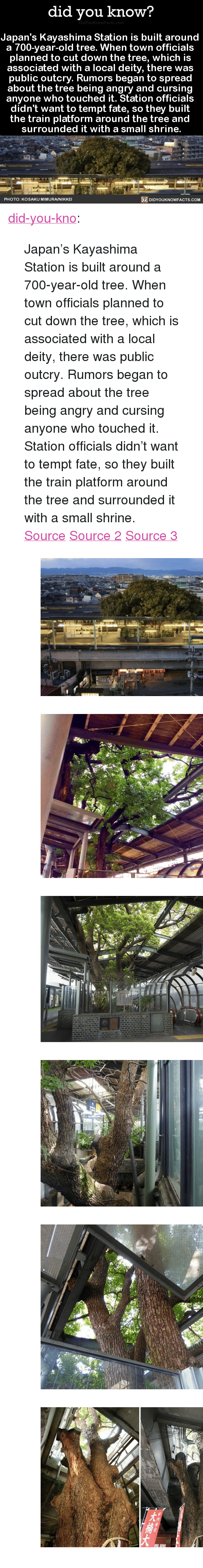 """Shrine: did you know?  Japan's Kayashima Station is built around  a 700-vear-old tree. When town officials  planned to cut down the tree, which is  associated with a local deity, there was  public outcry. Rumors began to spread  about the tree being angry and cursin  anyone who touched it. Station officials  didn't want to tempt fate, so they built  the train platform around the tree and  surrounded it with a small shrine.  PHOTO: KOSAKU MIMURA/NIKKE  DIDYOUKNOWFACTS.CoM <p><a href=""""http://didyouknowblog.com/post/158719101556/japans-kayashima-station-is-built-around-a"""" class=""""tumblr_blog"""">did-you-kno</a>:</p> <blockquote> <p>Japan's Kayashima Station is built around  a 700-year-old tree. When town officials  planned to cut down the tree, which is  associated with a local deity, there was  public outcry. Rumors began to spread  about the tree being angry and cursing  anyone who touched it. Station officials  didn't want to tempt fate, so they built  the train platform around the tree and  surrounded it with a small shrine.  <a href=""""http://www.spoon-tamago.com/2017/01/21/kayashima-the-japanese-train-station-built-around-a-700-year-old-tree/"""">Source</a> <a href=""""http://mymodernmet.com/kayashima-station-camphor-tree/"""">Source 2</a> <a href=""""http://www.atlasobscura.com/places/kayashima-station"""">Source 3</a></p> <figure class=""""tmblr-full"""" data-orig-height=""""339"""" data-orig-width=""""540""""><img src=""""https://78.media.tumblr.com/6db5d29da101ddfaf26022f04de5b681/tumblr_inline_on74fjj7621uy8wg3_540.jpg"""" data-orig-height=""""339"""" data-orig-width=""""540""""/></figure><figure class=""""tmblr-full"""" data-orig-height=""""403"""" data-orig-width=""""540""""><img src=""""https://78.media.tumblr.com/add8874ad450eeefd38d59773a5c0daf/tumblr_inline_on74fjyMYv1uy8wg3_540.jpg"""" data-orig-height=""""403"""" data-orig-width=""""540""""/></figure><figure class=""""tmblr-full"""" data-orig-height=""""359"""" data-orig-width=""""540""""><img src=""""https://78.media.tumblr.com/6884871ae50eed2103c666942ea81536/tumblr_inline_on74fkVp341uy8wg3_540.jpg"""" data-orig-"""