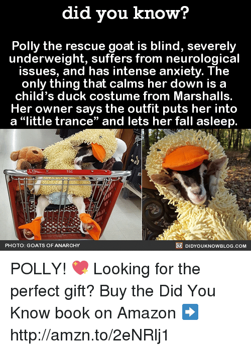 """neurology: did you know?  Polly the rescue goat is blind, severely  underweight, suffers from neurological  issues, and has intense anxiety. The  only thing that calms her down is a  child's duck costume from Marshalls.  Her owner says the outfit puts her into  a """"little trance"""" and lets her fall asleep  DIDYOUKNOWBLOG.coM  PHOTO: GOATS OF ANARCHY POLLY! 💖  Looking for the perfect gift? Buy the Did You Know book on Amazon ➡ http://amzn.to/2eNRlj1"""
