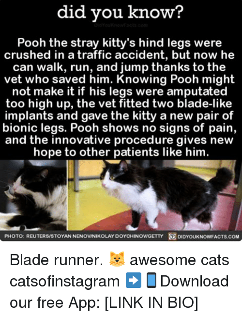 blade runner: did you know?  Pooh the stray kitty's hind legs were  crushed in a traffic accident, but now he  can walk, run, and jump thanks to the  vet who saved him. Knowing Pooh might  not make it if his legs were amputated  too high up, the vet fitted two blade-like  implants and gave the kitty a new pair of  bionic legs. Pooh shows no signs of pain,  and the innovative procedure gives new  hope to other patients like him.  PHOTO: REUTERS/STOYANNENOVINIKOLAY DOYCHINOVIGETTY DIDYOUKNOWFACTS.coM Blade runner. 🐱 awesome cats catsofinstagram ➡📱Download our free App: [LINK IN BIO]