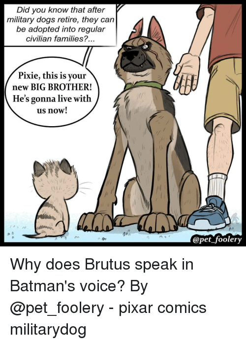 Dogs, Memes, and Pixar: Did you know that after  military dogs retire, they can  be adopted into regular  civilian families?  Pixie, this is your  new BIG BROTHER!  He's gonna live with  us now!  in  Opet foolery Why does Brutus speak in Batman's voice? By @pet_foolery - pixar comics militarydog