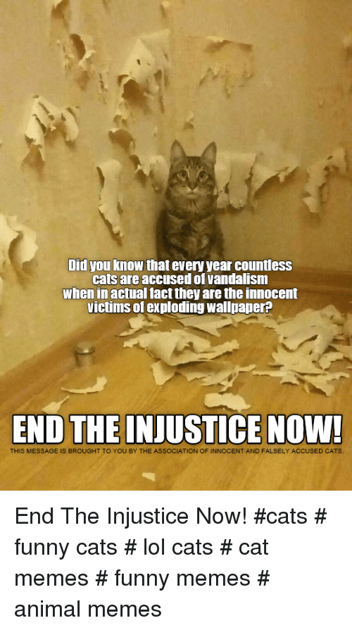 Cats, Funny, and Lol: Did you know that every year countless  cats are accused of vandalism  when in actual fact they are the innocent  victims of exploding wallpaper?  END THE INJUSTICE NOW!  THIS MESSAGE IS BROUGHT TO YOU BY THE ASSOCIATION OF INNOCENT AND FALSELY ACCUSED CATS End The Injustice Now!  #cats # funny cats # lol cats # cat memes # funny memes # animal memes