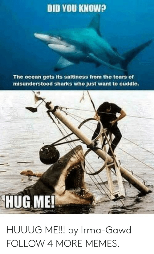 Irmã: DID YOU KNOW?  The ocean gets its saltiness from the tears of  misunderstood sharks who just want to cuddle.  HUG ME! HUUUG ME!!! by Irma-Gawd FOLLOW 4 MORE MEMES.