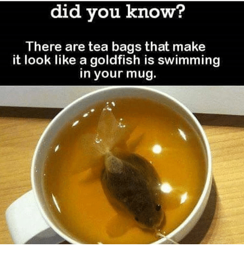 tea bagging: did you know?  There are tea bags that make  it look like a goldfish is swimming  in your mug.