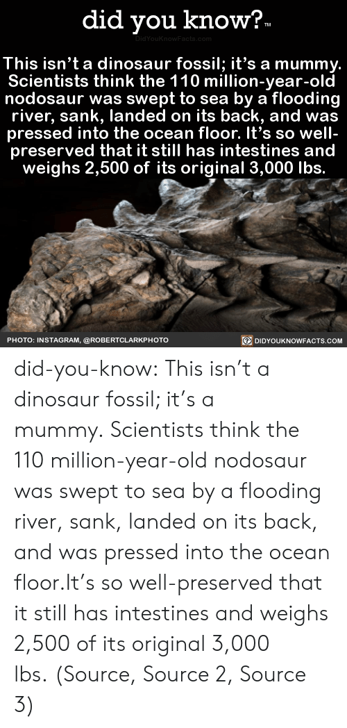 Dinosaur, Instagram, and Tumblr: did you know?  TM  DidYouKnowFacta.com  This isn't a dinosaur fossil; it's a mummy.  Scientists think the 110 million-year-old  nodosaur was swept to sea by a flooding  river, sank, landed on its back, and was  pressed into the ocean floor. It's so well-  preserved that it still has intestines and  weighs 2,500 of its original 3,000 lbs.  DIDYOUKNOWFACTS.COM  PHOTO: INSTAGRAM, @ROBERTCLARKP HOTO did-you-know:  This isn't a dinosaur fossil; it's a mummy. Scientists think the 110 million-year-old nodosaur was swept to sea by a flooding river, sank, landed on its back, and was pressed into the ocean floor.It's so well-preserved that it still has intestines and weighs 2,500 of its original 3,000 lbs. (Source, Source 2, Source 3)
