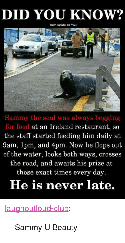 """Club, Food, and Tumblr: DID YOU KNOW?  Truth Inside Of You  Sammy the seal was always begging  for food at an Ireland restaurant, so  the staff started feeding him daily at  9am, 1pm, and 4pm. Now he flops out  of the water, looks both ways, crosses  the road, and awaits his prize at  those exact times every day.  He is never late. <p><a href=""""http://laughoutloud-club.tumblr.com/post/172117413825/sammy-u-beauty"""" class=""""tumblr_blog"""">laughoutloud-club</a>:</p>  <blockquote><p>Sammy U Beauty</p></blockquote>"""