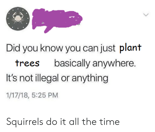 squirrels: Did you know you can just plant  basically anywhere.  trees  It's not illegal or anything  1/17/18, 5:25 PM Squirrels do it all the time