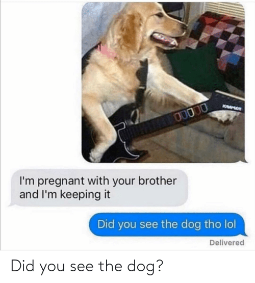 the dog: Did you see the dog?