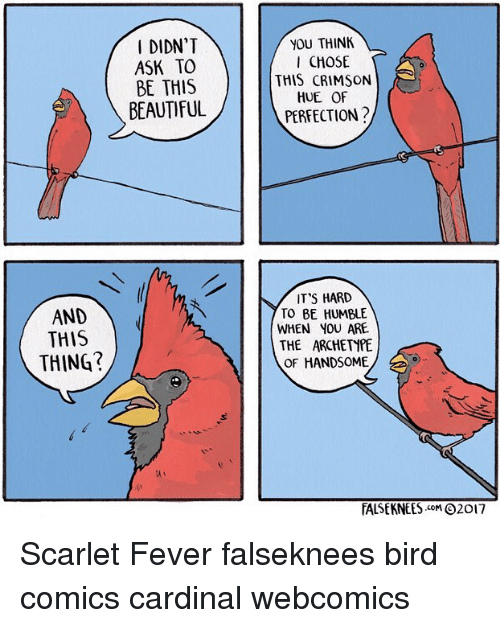 Feveral: DIDN'T  ASK TO  BE THIS  BEAUTIFUL  YOU THINK  CHOSE  THIS CRIMSON  HUE OF  PERFECTION?  IT'S HARD  TO BE HUMBLE  WHEN YOU ARE  THE ARCHETYPE  OF HANDSOME  AND  AND  THIS  THING?  TALSE KNEES .coM Θ2017 Scarlet Fever falseknees bird comics cardinal webcomics