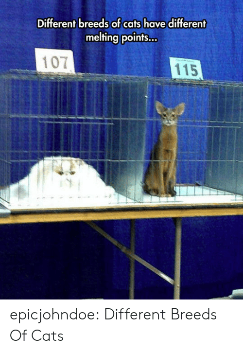melting: Different breeds of cats have different  melting points...  107  115 epicjohndoe:  Different Breeds Of Cats