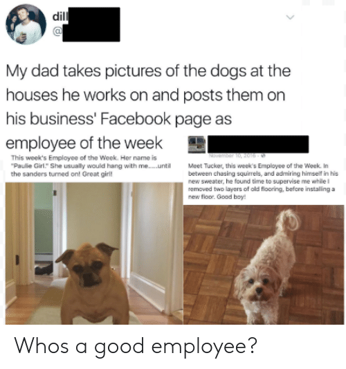 "Dad, Dogs, and Facebook: dil  Cl  My dad takes pictures of the dogs at the  houses he works on and posts them on  his business' Facebook page as  employee of the week  This week's Employee of the Week. Her name is  Paulie Girl."" She usually would hang with me...uMeet Tucker, this week's Employee of the Week. In  the sanders turned on! Great giril  between chasing squirrels, and admiring himself in his  new sweater, he found time to supervise me while  removed two layers of ald flooring, before installing a  new floor. Goad bay! Whos a good employee?"