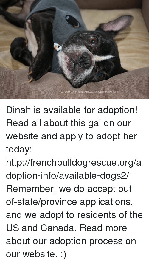 Applie: DINAH ERENCHBULLDOGRESCUE ORG Dinah is available for adoption! Read all about this gal on our website <location, likes, dislikes> and apply to adopt her today: http://frenchbulldogrescue.org/adoption-info/available-dogs2/  Remember, we do accept out-of-state/province applications, and we adopt to residents of the US and Canada. Read more about our adoption process on our website. :)