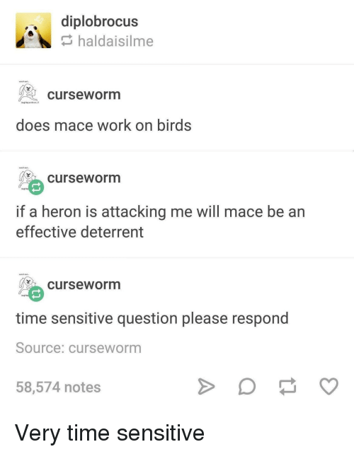 mace: diplobrocus  haldaisilme  waech out  curseworm  tough bay on the  does mace work on birds  wich ouf.  curseworm  tough  if a heron is attacking me will mace be an  effective deterrent  watch out  curseworm  time sensitive question please respond  Source: curseworm  58,574 notes Very time sensitive