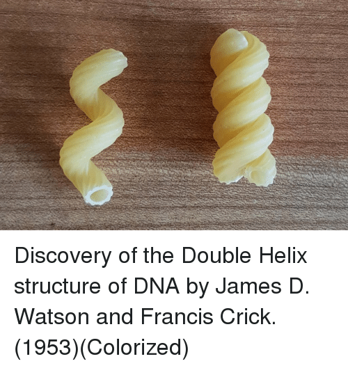 Helix, Dna, and The Double: Discovery of the Double Helix structure of DNA by James D. Watson and Francis Crick. (1953)(Colorized)