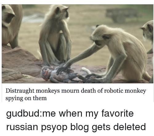 Mourn: Distraught monkeys mourn death of robotic monkey  spying on them gudbud:me when my favorite russian psyop blog gets deleted