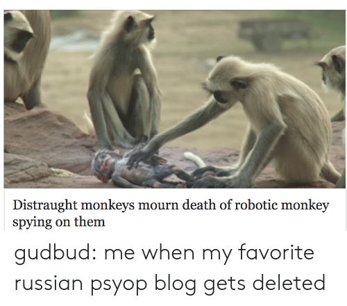 Mourn: Distraught monkeys mourn death of robotic monkey  spying on them gudbud: me when my favorite russian psyop blog gets deleted