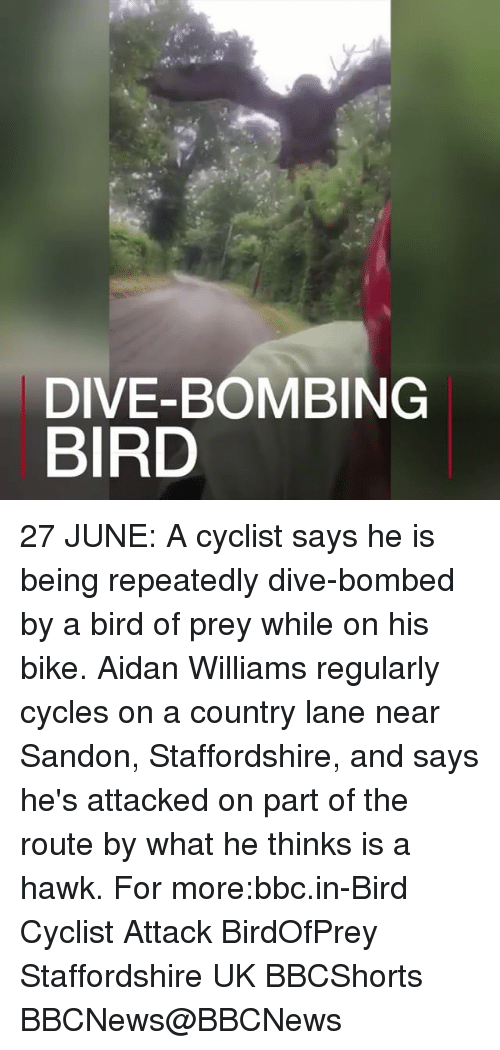 hawke: DIVE-BOMBING  BIRD 27 JUNE: A cyclist says he is being repeatedly dive-bombed by a bird of prey while on his bike. Aidan Williams regularly cycles on a country lane near Sandon, Staffordshire, and says he's attacked on part of the route by what he thinks is a hawk. For more:bbc.in-Bird Cyclist Attack BirdOfPrey Staffordshire UK BBCShorts BBCNews@BBCNews