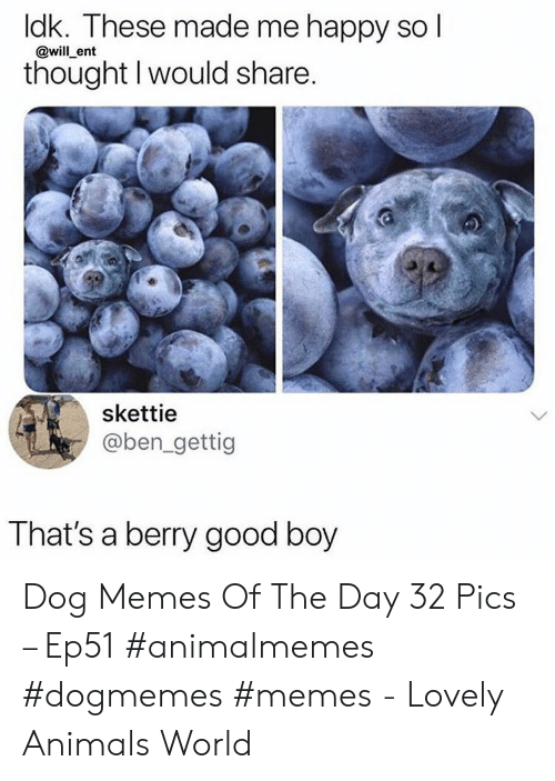 Animals, Memes, and Good: dk. These made me happy so I  @will ent  thought I would share.  skettie  @ben_gettig  That's a berry good boy Dog Memes Of The Day 32 Pics – Ep51 #animalmemes #dogmemes #memes - Lovely Animals World