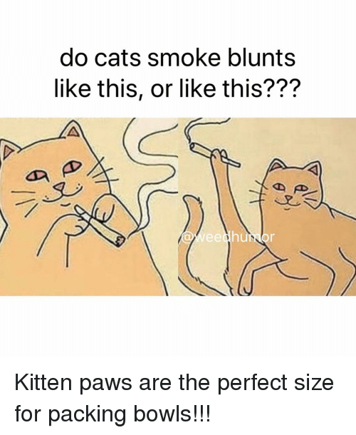 blunts: do cats smoke blunts  like this, or like this???  Weedhumor Kitten paws are the perfect size for packing bowls!!!