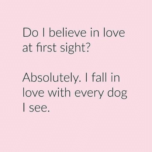 love at first sight: Do I believe in love  at first sight?  Absolutely. I fall in  love with every dog  see.