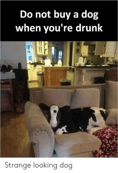 Drunk, Dog, and Looking: Do not buy a dog  when you're drunk Strange looking dog