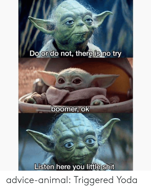 Advice, Shit, and Tumblr: Do or do not, there is no try  ०ा  boomer, ok  Listen here you little shit advice-animal:  Triggered Yoda