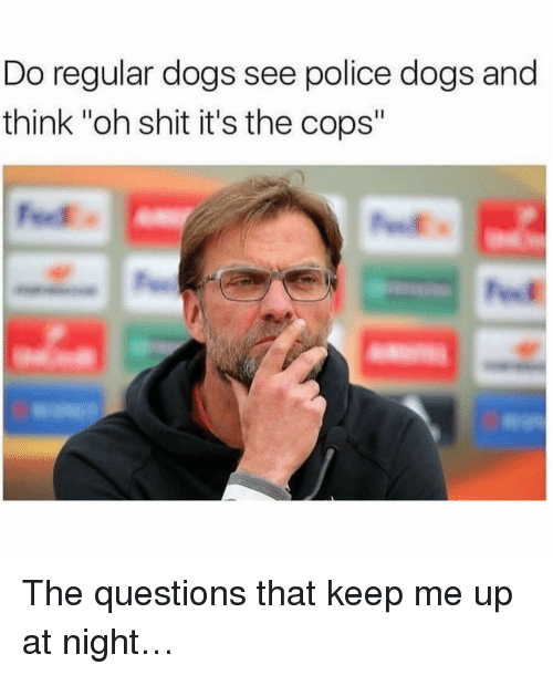 """Dogs, Memes, and Police: Do regular dogs see police dogs and  think """"oh shit it's the cops"""" The questions that keep me up at night…"""