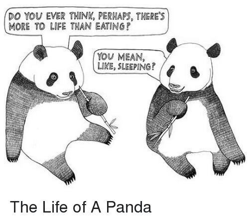 More To Life: DO YOU EVER THIN, PERWAPS, THERE'S  MORE TO LIFE THAN EATINGP  YOU MEAN,  LIKE, SLEEPING? <p>The Life of A Panda</p>