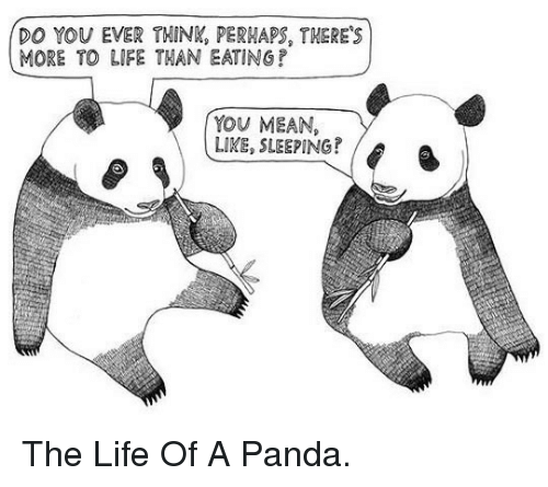 More To Life: DO YOU EVER THINK, PERMAPS, THERE'S  MORE TO LIFE THAN EATINGP  YOU MEAN,  LIKE, SLEEPING? <p>The Life Of A Panda.</p>
