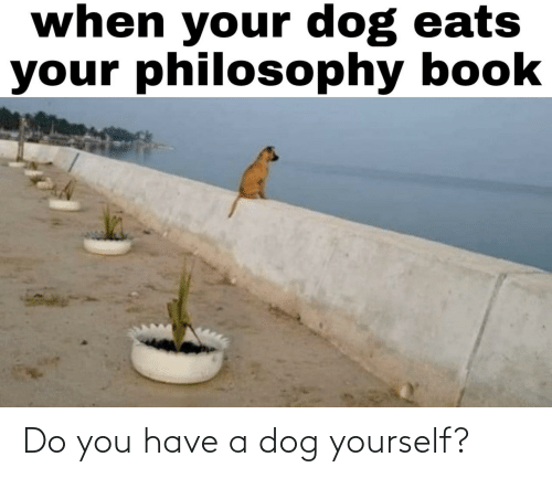 Do You Have: Do you have a dog yourself?