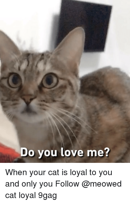 9gag, Love, and Memes: Do you love me When your cat is loyal to you and only you Follow @meowed cat loyal 9gag