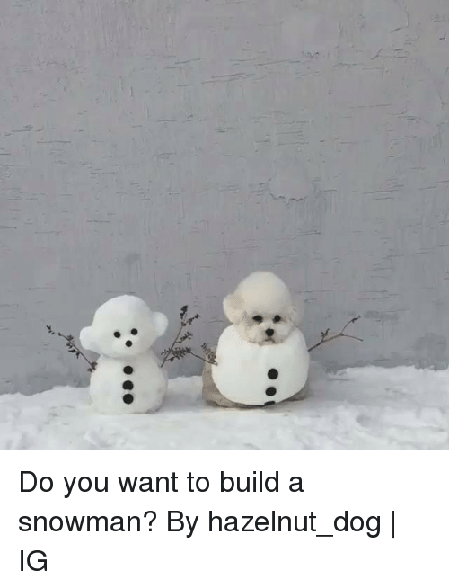 Dank, 🤖, and Dog: Do you want to build a snowman?  By hazelnut_dog | IG