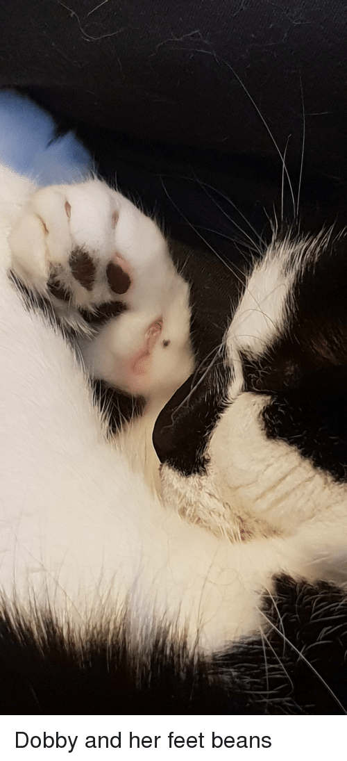 Feet, Her, and Tiny: Dobby and her feet beans