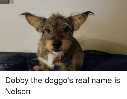 Doggo, Name, and Nelson: Dobby the doggo's real name is Nelson