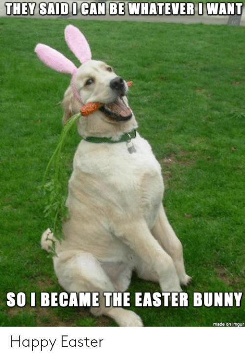 easter bunny: DOCAN BE WHATEVE  RI WANT  SO I BECAME THE EASTER BUNNY  made on imgur Happy Easter