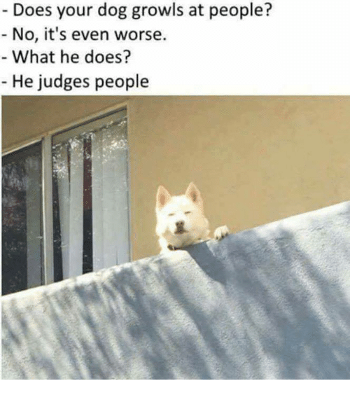 dogging: Does your dog growls at people?  No, i's even worse.  What he does?  He judges people
