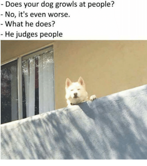 dogged: Does your dog growls at people?  No, it's even worse.  What he does?  He judges people