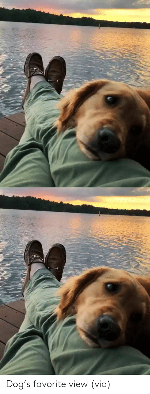 aww: Dog's favorite view (via)