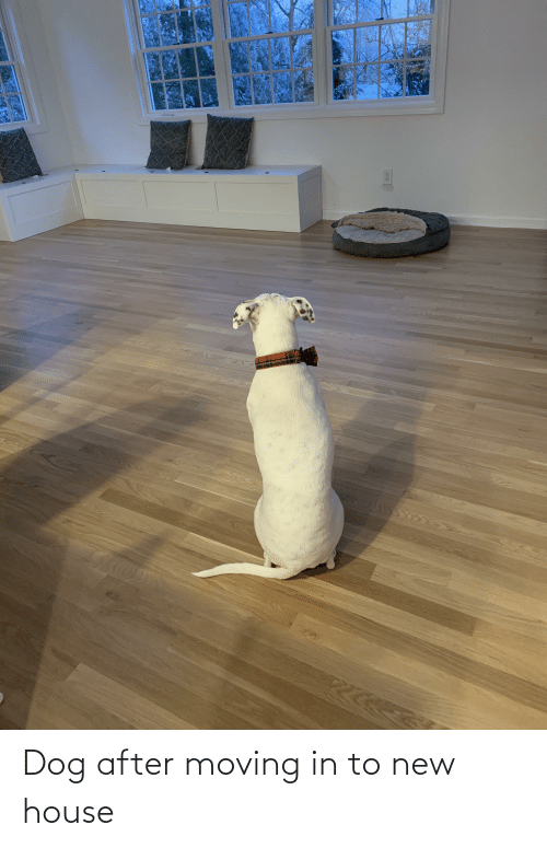 moving in: Dog after moving in to new house