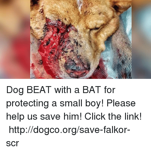 Boy Please: Dog BEAT with a BAT for protecting a small boy! Please help us save him! Click the link!  ► http://dogco.org/save-falkor-scr