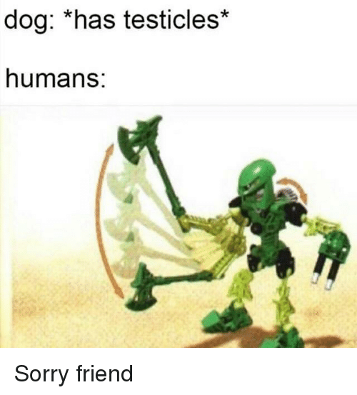 Sorry, Dog, and Friend: dog: *has testicles'  humans: Sorry friend