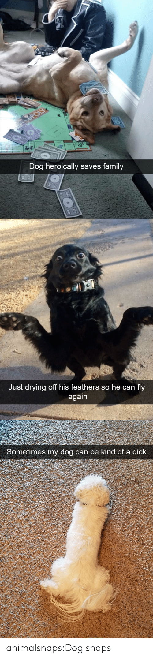 a dick: Dog heroically saves family   Just drying off his feathers so he can fly   Sometimes my dog can be  kind of a dick animalsnaps:Dog snaps