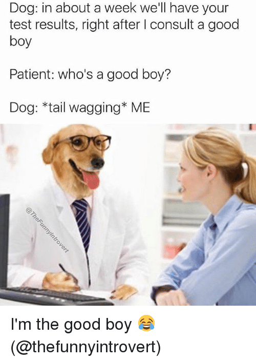 tail wagging: Dog: in about a week we'll have your  test results, right after l consult a good  boy  Patient: who's a good boy?  Dog: *tail wagging* ME I'm the good boy 😂 (@thefunnyintrovert)